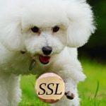 A New SSL Exploit in SSL v3.0 – POODLE attack