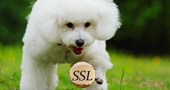 SSL v3.0 POODLE